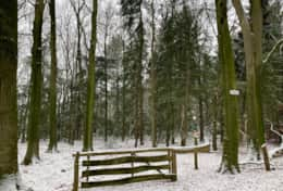 181216 - Heezeberg - Snow forest