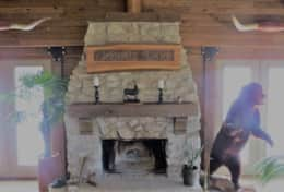 fireplace bear