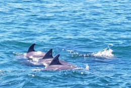 go dolphin watching