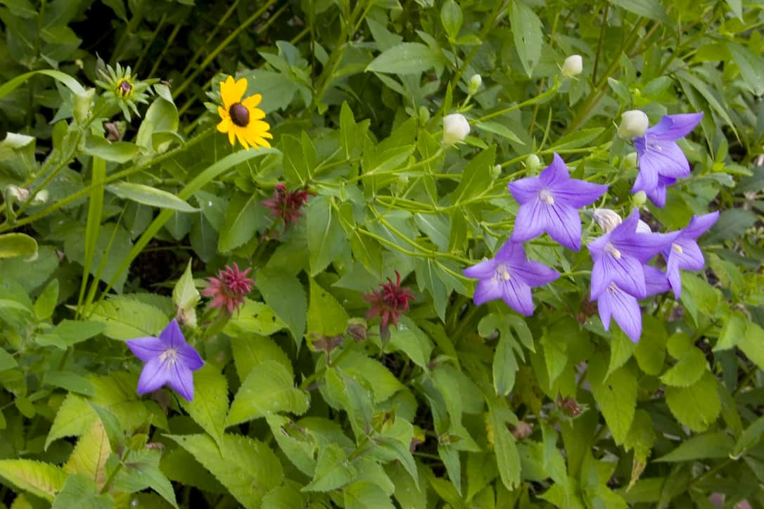 Wildflowers at Pine Grove Park Bed and Breakfast Guest House in Reedsburg