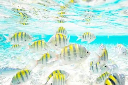 Tropical fish to be seen while snorkling on Paradise Island